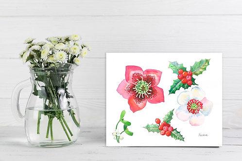Цветы морозника и ветви остролиста