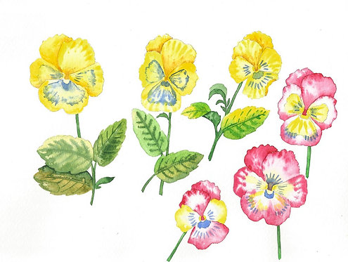 Розовые и желтые фиалки, анютины глазки
