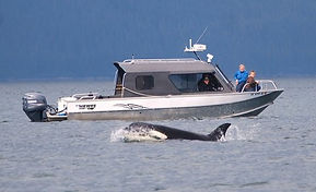 Boat Merlin with orca killer whale