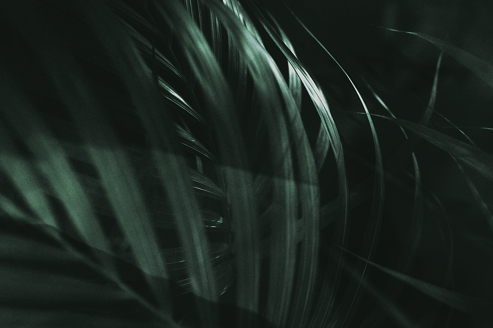 green-palm-leaf-on-a-dark-background-LUVCZP5.png
