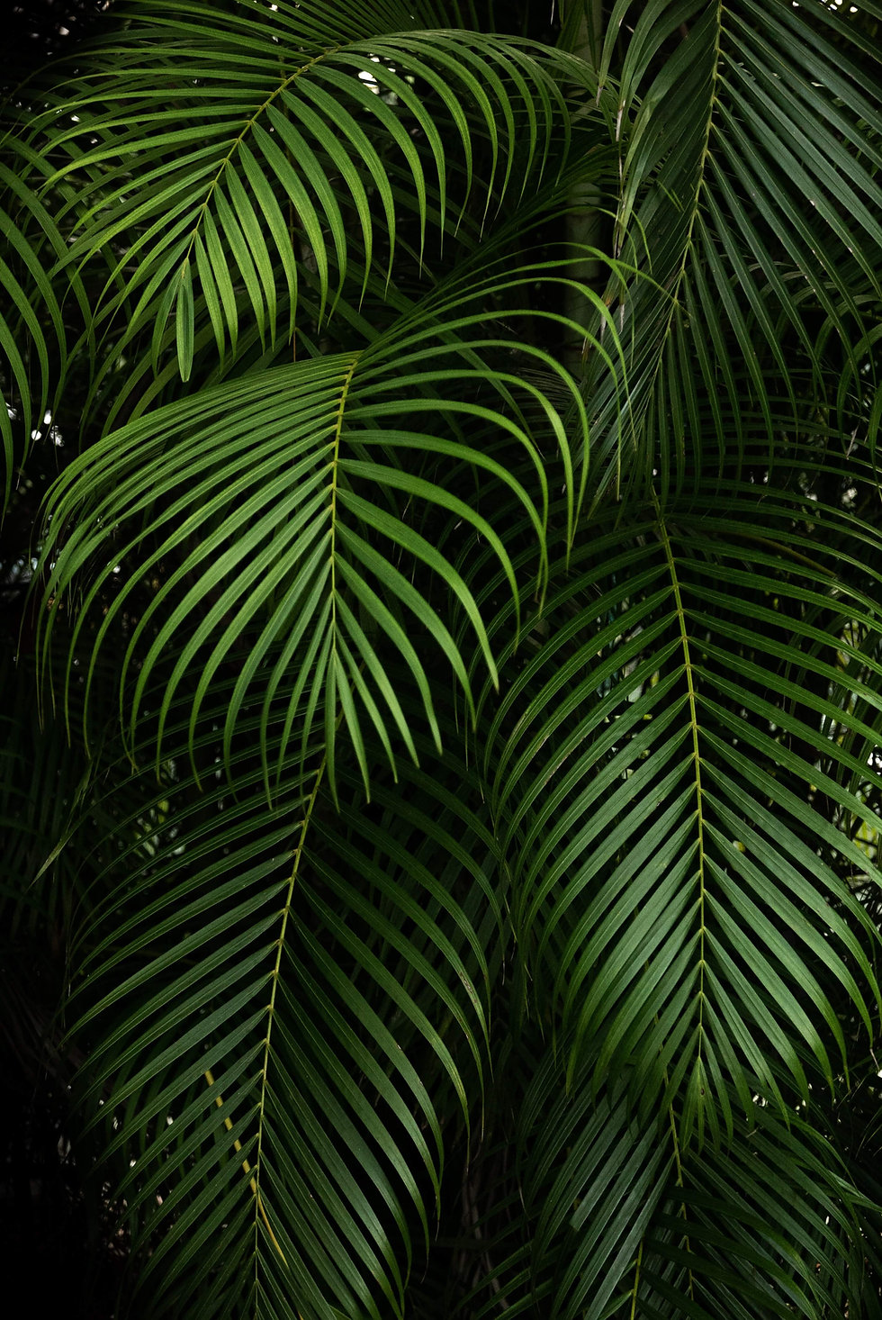 leaves header.jpg