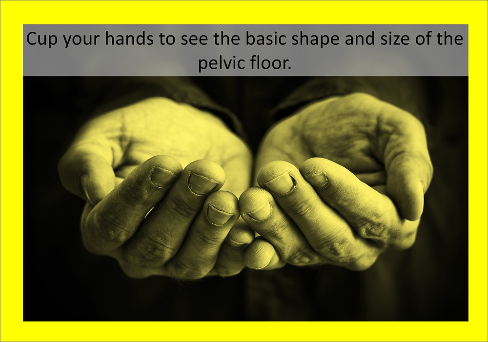 Part 3 - Hands cupping showing the basic shape and size of the pelvic floor.