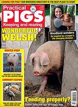 Practical Pigs.jpg
