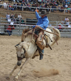 2017 Rodeo Pic 1