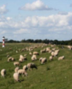 Pastoral%20Scene_edited.jpg