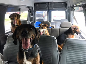 Dog daycare, Dog boarding, Dog grooming Cage free daycare,Cage free boarding