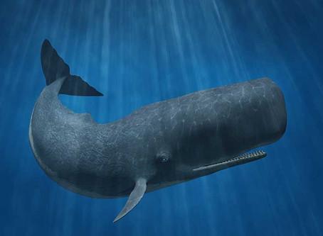 ¿Sabías que en Tenerife viven ballenas, tortugas y delfines?