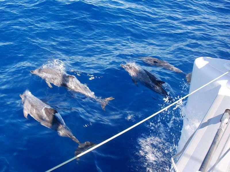Avistando delfines