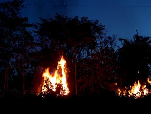 Especial Amazônia: Queimadas ameaçam o futuro da floresta