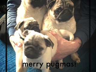 Merry Pug-mas to you all!