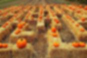 straw bale maze