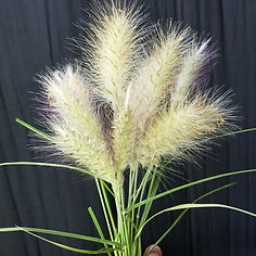 Feathertop grass