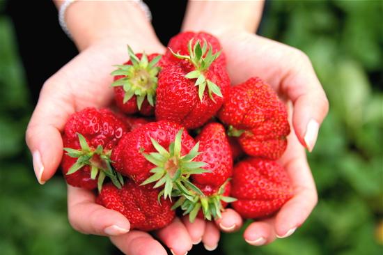shuksan strawberries