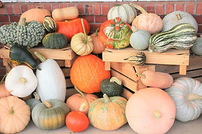 winter squashes and pumpkins