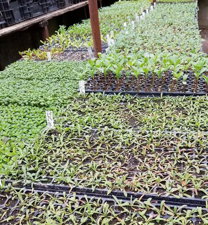 March seedlings