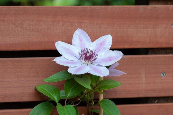 moderne-tuin-3.jpg