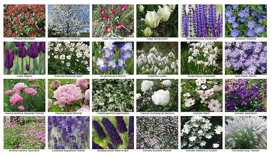 Fotolijst Beplantingsplan Sen.jpg