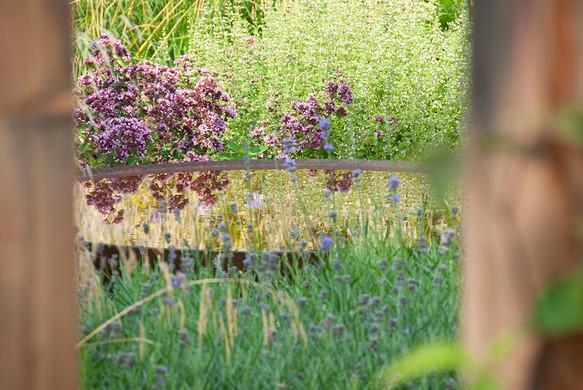 Mediterrane tuin-3.jpg