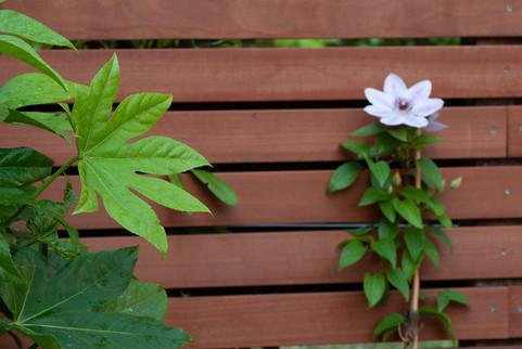 moderne-tuin-2.jpg