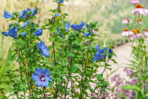 Mediterrane tuin-7.jpg