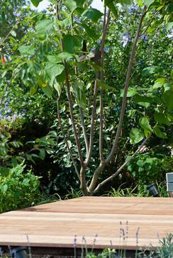 moderne-tuin-9.jpg