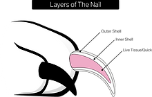 layers+of+the+nail.png
