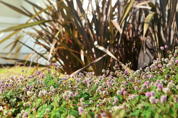 jardim e plantas para paisagismo - arquitetura e paisagismo para florianópolis e região