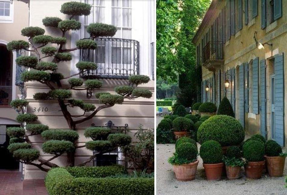 Árvores Ornamentais e Arbustos.