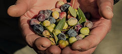 Agroles оливковое масло и оливки