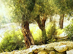Santagata оливковое масло и оливки
