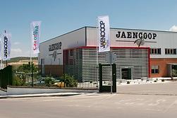 Jaencoop оливковое масло и оливки