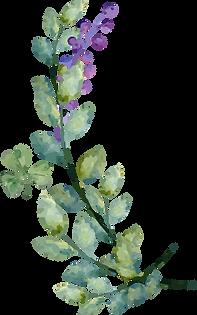 Paarse bloemen pdf