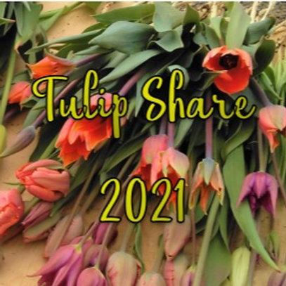Tulip Share 2021