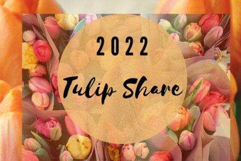 Tulip Share 2022