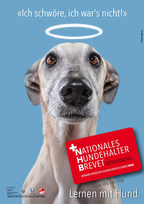 Nationales Hundehalter Brevet NHB Angel d