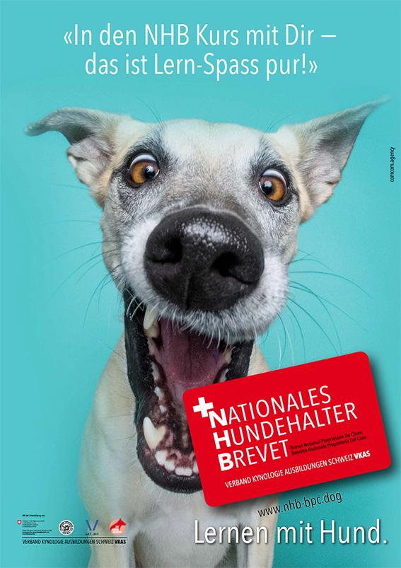 Nationales Hundehalter Brevet NHB grosse Klappe d