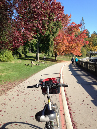Stanley Park by bike