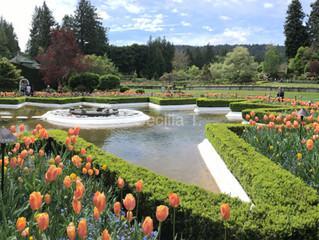 Victoria e Butchart Gardens na primavera