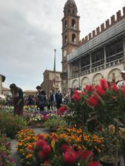 Faenza c'entro in Fiore
