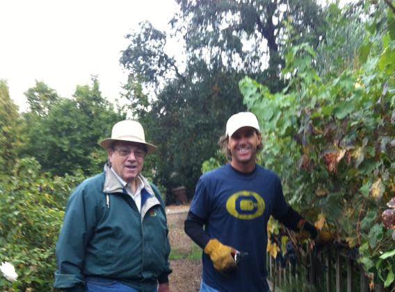 harvest 2012 ferro vineyards.jpg