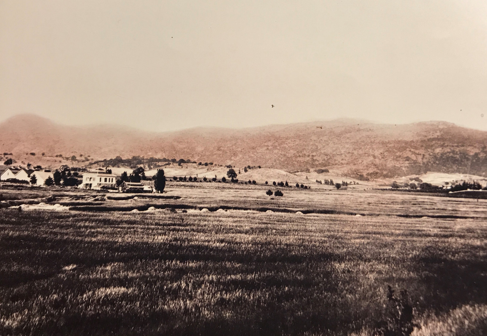 Carbone Ranch Sepia (2).jpg