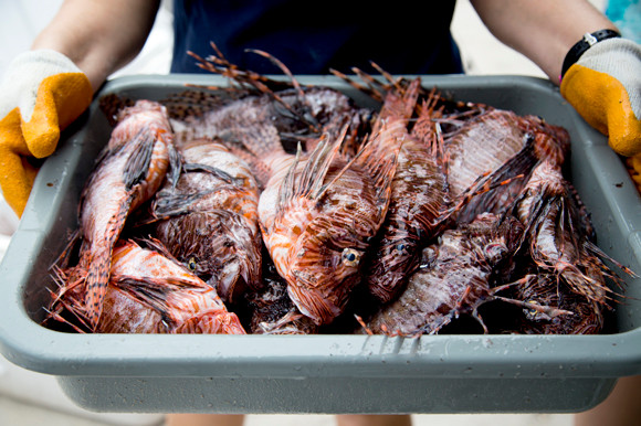 Over 800 fish were harvested for the event