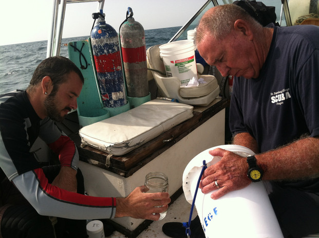 Collecting the sample