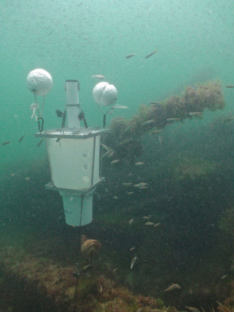 Deployed trap underwater