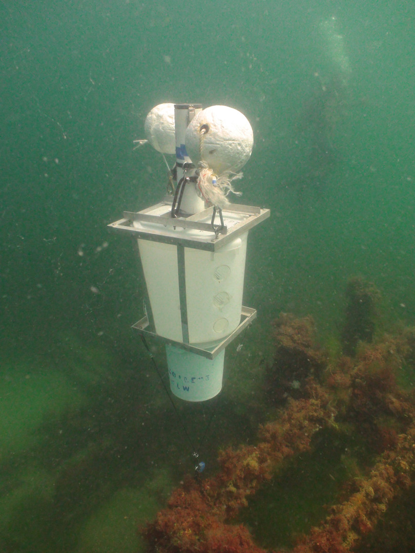 Deployed light trap underwater