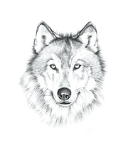 Wolf PNG.png
