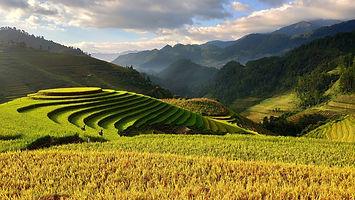Vietnam_Agriculture.jpg