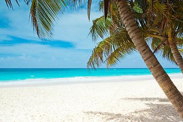 Beach_Palmtree.jpg
