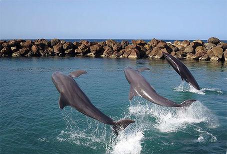 Dolphin Swim Experience