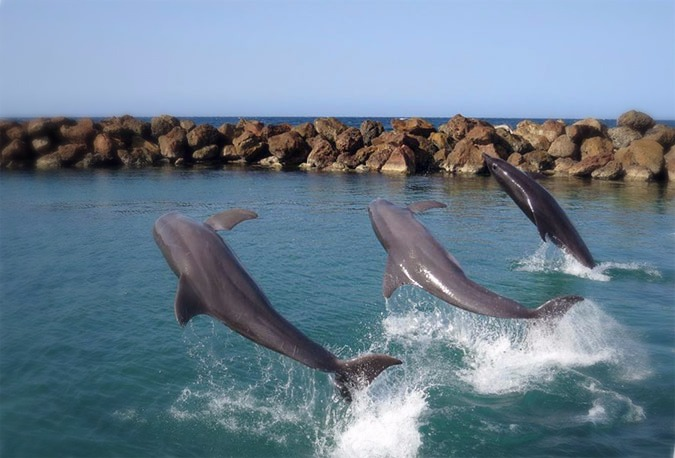 Dolphins-Cove_edited
